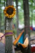 sunflower-hammock-20150713-img_5994